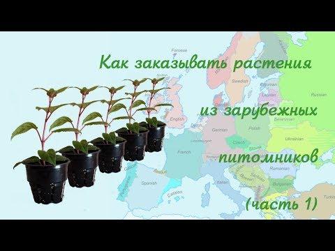 Заказываем растения в