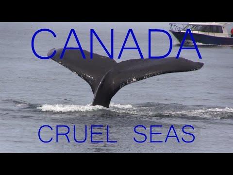 Cruel Seas: Canada - Episode Two