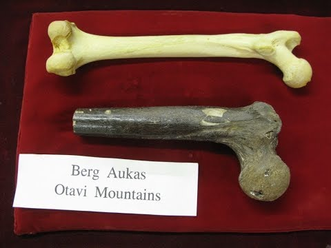 Is This A Bone Of A Giant Human?