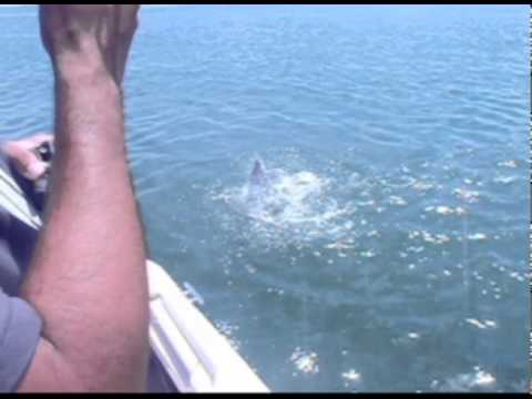 North jetties galveston texas bull red fishing youtube for Galveston jetty fishing report