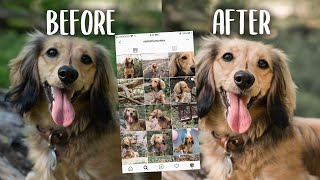 IMPROVE YOUR DOG'S INSTAGRAM WITH THIS 1 EASY HACK