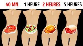 Combien de Temps Tes Aliments Préférés Restent-ils Dans Ton Estomac ?