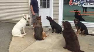 Quintuple Doggie Door Manners | Dog Training Atlanta