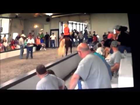 King horse sales at Shelbyville Tenn. Wiser Farm Sale