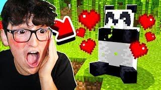 I FOUND MY FIRST PANDA!!
