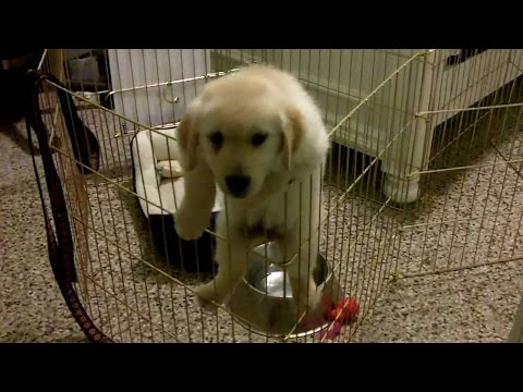 Funny Puppies Escaping Cage Compilation 2015 [HD] AHF
