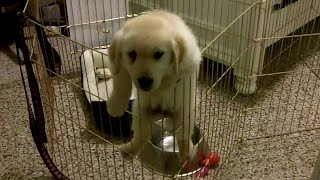 Funny Puppies Escaping Cage [HD]