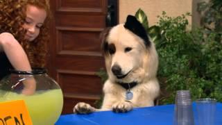 Собака точка ком (Сезон 2 Серия 18)