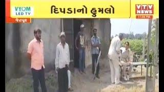 Jetpur માં દિપડાએ વાછરડીનું કર્યું મારણ, વનવિભાગે દીપડાને પકડવા મૂક્યું પાંજરું | VTV Gujarati