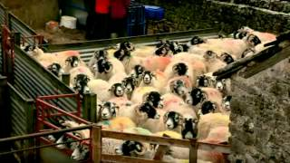 Lambing Live  2011 - Episode 2