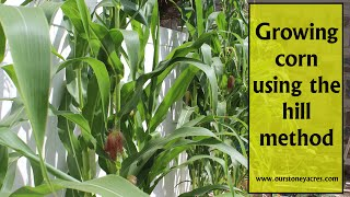 Gardening Tips: Growing Corn in Hills (Ep 12)