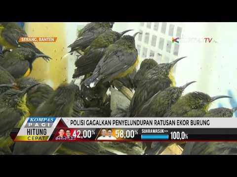 Polisi Gagalkan Penyelundupan Ratusan Ekor Burung