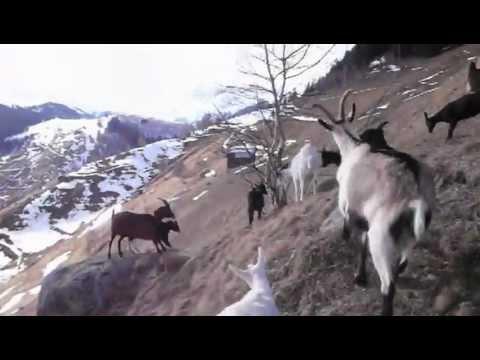 Soliva Geisse Downhill 1
