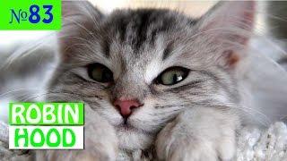 ПРИКОЛЫ 2017 с животными. Смешные Коты, Собаки, Попугаи // Funny Dogs Cats Compilation. Апрель №83