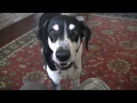 Funny Talking dog | 2016 Edition