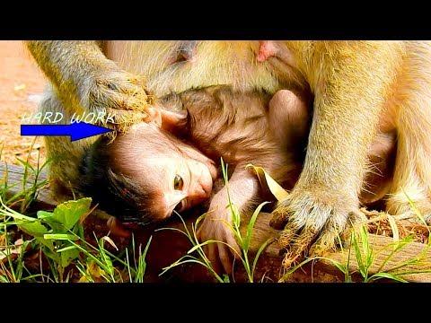 Lizzy Monkey Stop