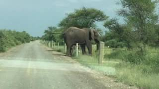 Elephant Dick electric fencing