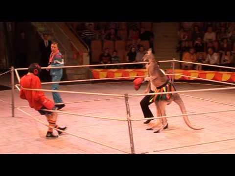 бокс с кенгуру Расулов
