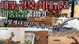 대구경북 최대 규모 파충류샵 탐방기!!/Feat.금자의…