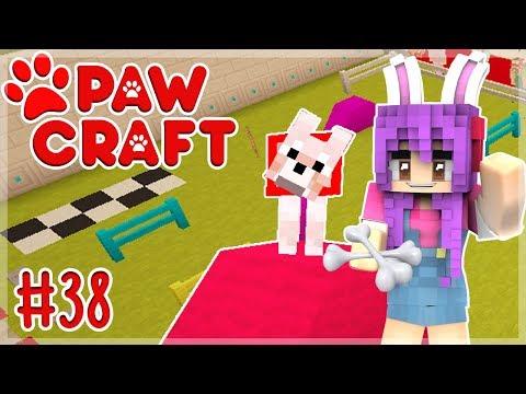 Entrenamiento canino - Paw Craft 🐶- Ep 38