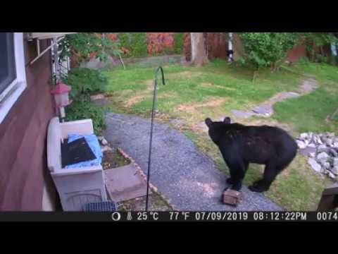 WATCH: West Milford Dog Scares Off Backyard Bear