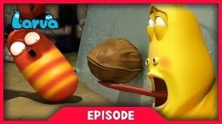 LARVA - WALNUT | 2017 Cartoon Movie | Cartoons For Children |  라바 | LARVA Official