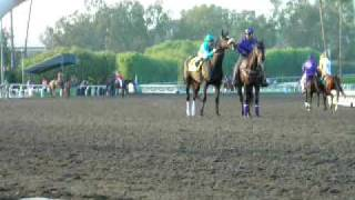Zenyatta and Mike Smith, gate, 2009 Breeders' Cup Classic