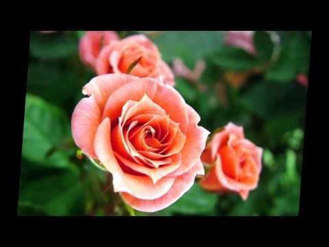 Florida Boys - Where The Roses Never Fade