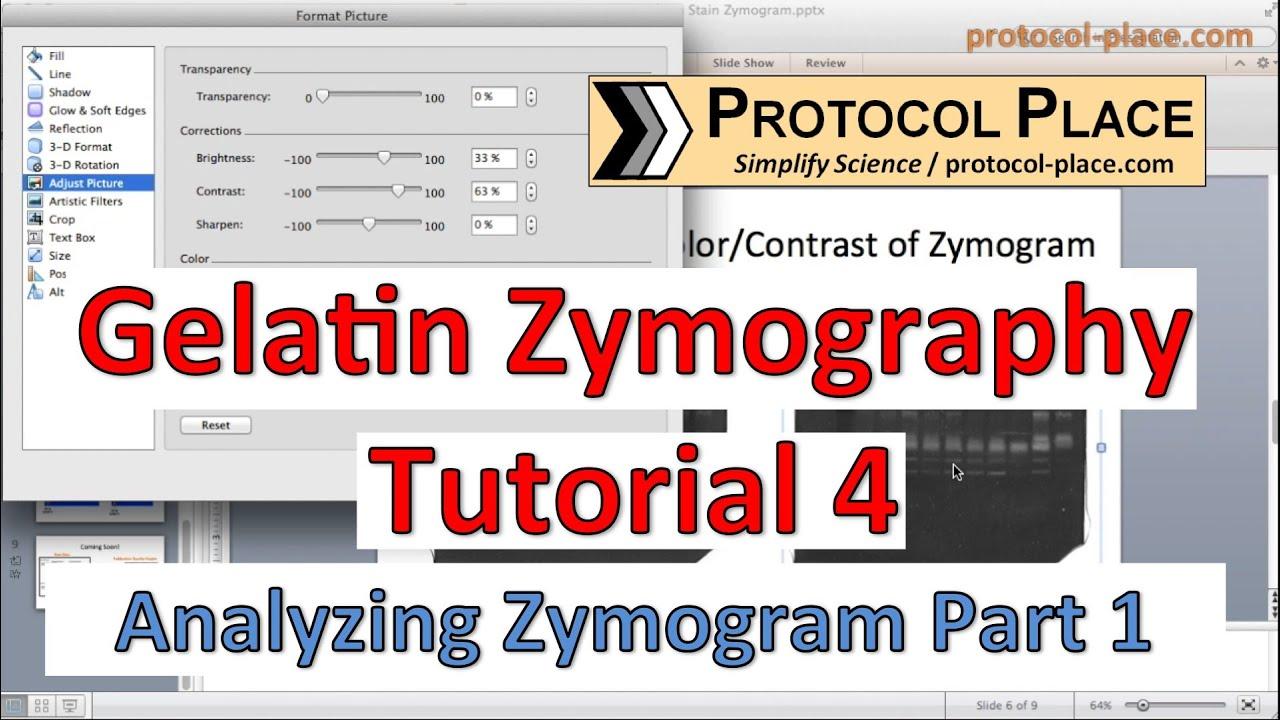 ZYMOGRAM PROTOCOL PDF DOWNLOAD