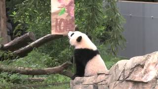 #BaoBaoBday: What is a Zhuazhou?