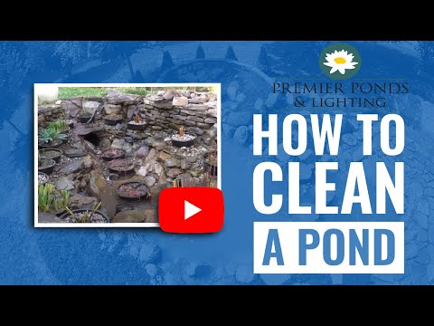 How To Clean A Koi Pond For Fall Pond Maintenance