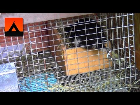 When to give a pregnant rabbit a nest box