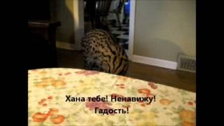 Даже кошки за здоровое питание!!!