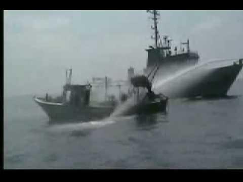 Italian peace activist injured by israeli army navy - Palestine