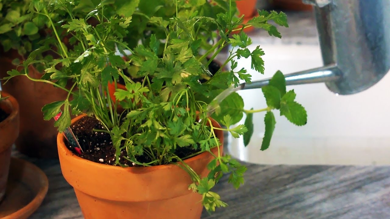 how to grow herbs indoors at home with p allen smith youtube. Black Bedroom Furniture Sets. Home Design Ideas