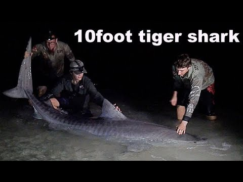 MONSTER shark fishing Australia ( Tag & Release Pt.1 )
