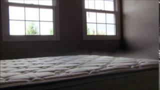 Bed Bugs – Destroying Lives
