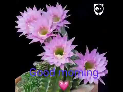 New Santali Good Morning  Video 2019