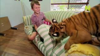 Тигры в доме - Viasat Nature HD