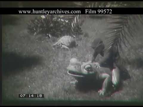 Monaco Gardens, 1950s - Film 99572