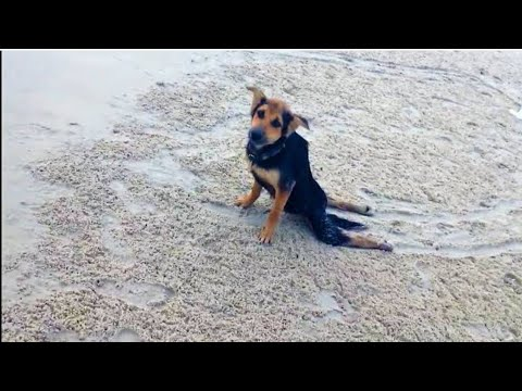 Nobody Wanted To Help This Paralyzed Pup  But Then A Model Spotted Him Crawling Along A Beach