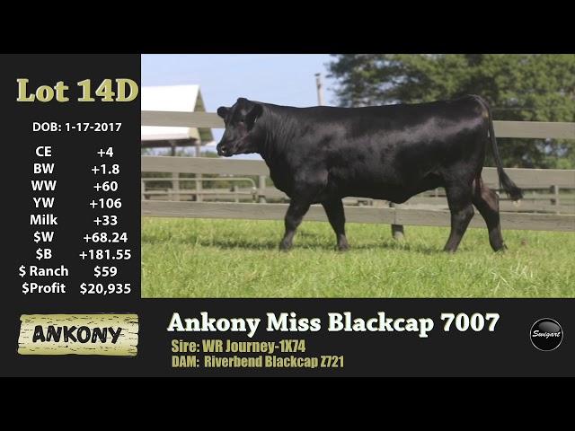 Ankony Lot 14D
