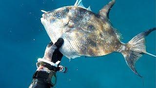 Sığ su zıpkınla balık avı, zıpkın avı, spearfishing, balık avı, fishing