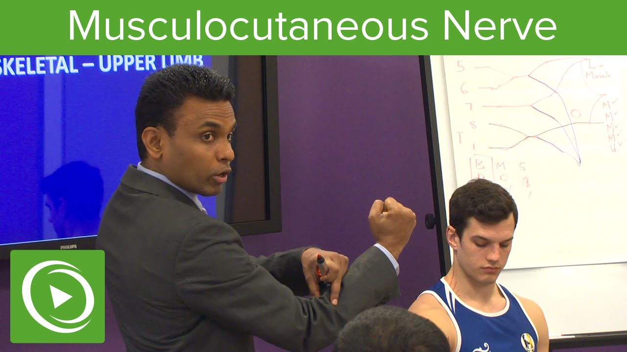 Musculocutaneous Nerve: Definition & Overview  – MRCS | Lecturio