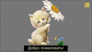 видео цветы фото на телефон