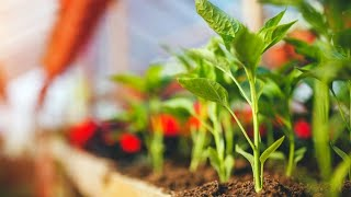 Plantas y hortalizas para cultivar en invernadero - Bricomanía