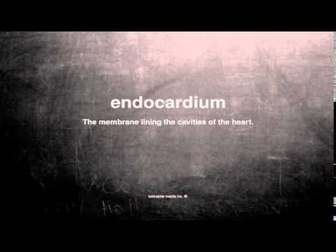 What does endocardium mean