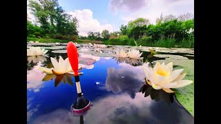 Ловля Карася перед дождем. Рыбалка на диком озере. 2 часа кайфа.
