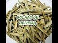 FOLHA DE OLIVEIRA  - EXCELENTE EMAGRECEDOR E PARA PRESSÃO ALTA