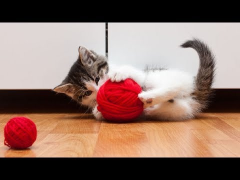 Funny Cats Playing with Yarn Compilation